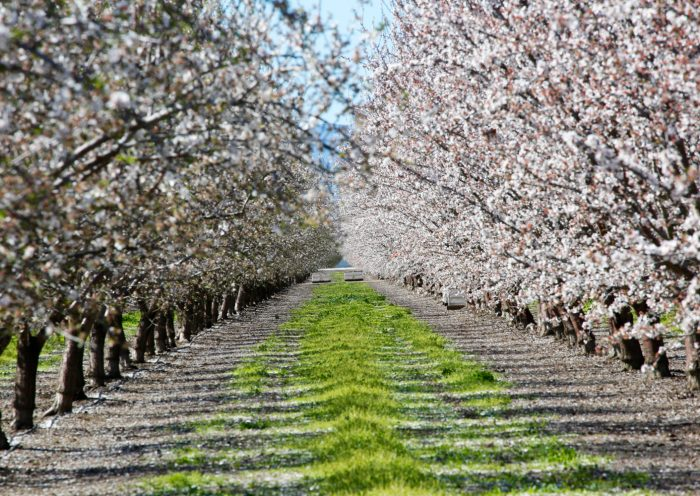 California's Almond Industry Threatened By Indian Tariffs