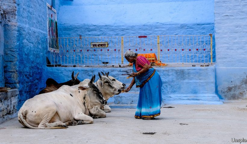 India's government is pouring money into dung